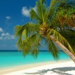 Beach with a palm tree - Stock Photo