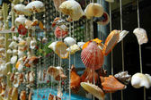 Hanging of seashells — Stock Photo