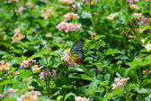 Amazing butterfly on the flowers — Stock Photo