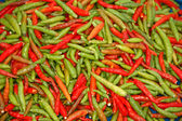 Chilli pepper — Stock Photo