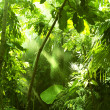 Tropical forest, trees in sunlight and rain — Foto Stock