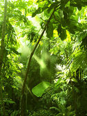Tropical forest, trees in sunlight and rain — Stock Photo