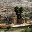 Mount of olives - Stock Photo