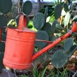 Stock Photo: Watering garden can