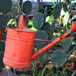 Watering garden can - Stock Photo