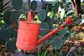 Watering garden can — Stock Photo