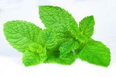 Mint close up on a white background — Stock Photo