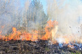 Forest and grass fire — Stock Photo