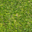 Royalty-Free Stock Photo: Green grass texture