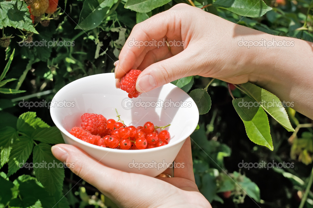 Woman's hand putting raspberry in the bowl — Stockfoto #10781829