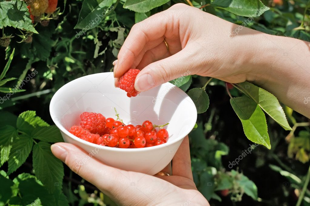 Woman's hand putting raspberry in the bowl — Lizenzfreies Foto #10781829