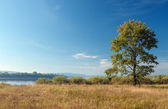 Lonely tree on the bank of the river. August. — Stock Photo
