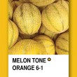 MELON TONE ORANGE. Color sample design — Stock Photo