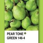 PEAR TONE GREEN. Color sample design — Stock Photo