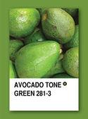 AVOCADO TONE GREEN. Color sample design — Stock Photo