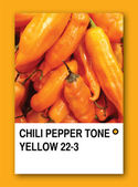 CHILI PEPPER TONE YELLOW. Color sample design — Stock Photo
