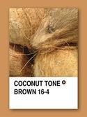 COCONUT TONE BROWN. Color sample design — Stock Photo