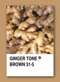 GINGER TONE BROWN. Color sample design — Stock Photo