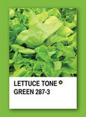 LETTUCE TONE GREEN. Color sample design — Stock Photo