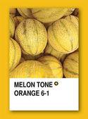 MELON TONE ORANGE. Color sample design — Stock Photo