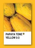 PAPAYA TONE YELLOW. Color sample design — Stock Photo