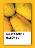 PAPAYA TONE YELLOW. Color sample design — Stock Photo