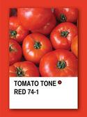 TOMATO TONE RED. Color sample design — Stock Photo