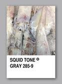 SQUID TONE GRAY. Color sample design — Stock Photo