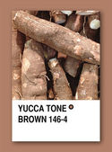YUCCA TONE BROWN. Color sample design — Stock Photo