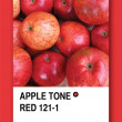 APPLE TONE RED. Color sample design - Stock Photo