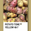 POTATO TONE YELLOW. Color sample design — Stock Photo