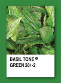 BASIL TONE GREEN. Color sample design — Stock Photo