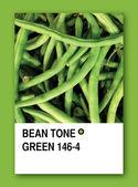BEAN TONE GREEN. Color sample design — Stock Photo