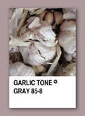 GARLIC TONE GRAY. Color sample design — Stock Photo