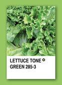 LETTUCE TONE GREEN. Color sample design — Stock Photo