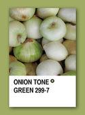 ONION TONE GREEN. Color sample design — Stock Photo