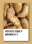 POTATO TONE BROWN. Color sample design — Stock Photo