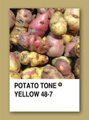 POTATO TONE YELLOW. Color sample design — Stock Photo