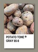 POTATO TONE GRAY. Color sample design — Stock Photo