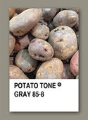 POTATO TONE GRAY. Color sample design — Stock Photo