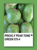 PRICKLY PEAR TONE GREEN. Color sample design — Stock Photo