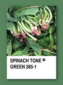 SPINACH TONE GREEN. Color sample design — Stock Photo