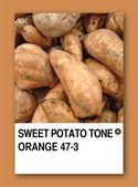 SWEET POTATO TONE ORANGE. Color sample design — Stock Photo