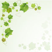 Druvor vinstockar bakgrund — Stockvektor