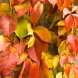 Red autumn leaves — Foto de Stock