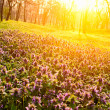 Stock Photo: Flowers in morning light