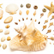 Royalty-Free Stock Photo: Shells arrangement