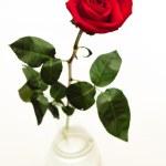 Red rose in vase — Stock Photo #10777237