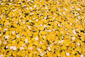 Fall leaves bed — Stock Photo