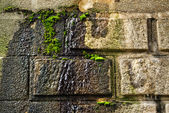 Old mossy wall — Stock Photo
